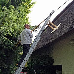 Chemische bestrijding van algen op een rieten dak.